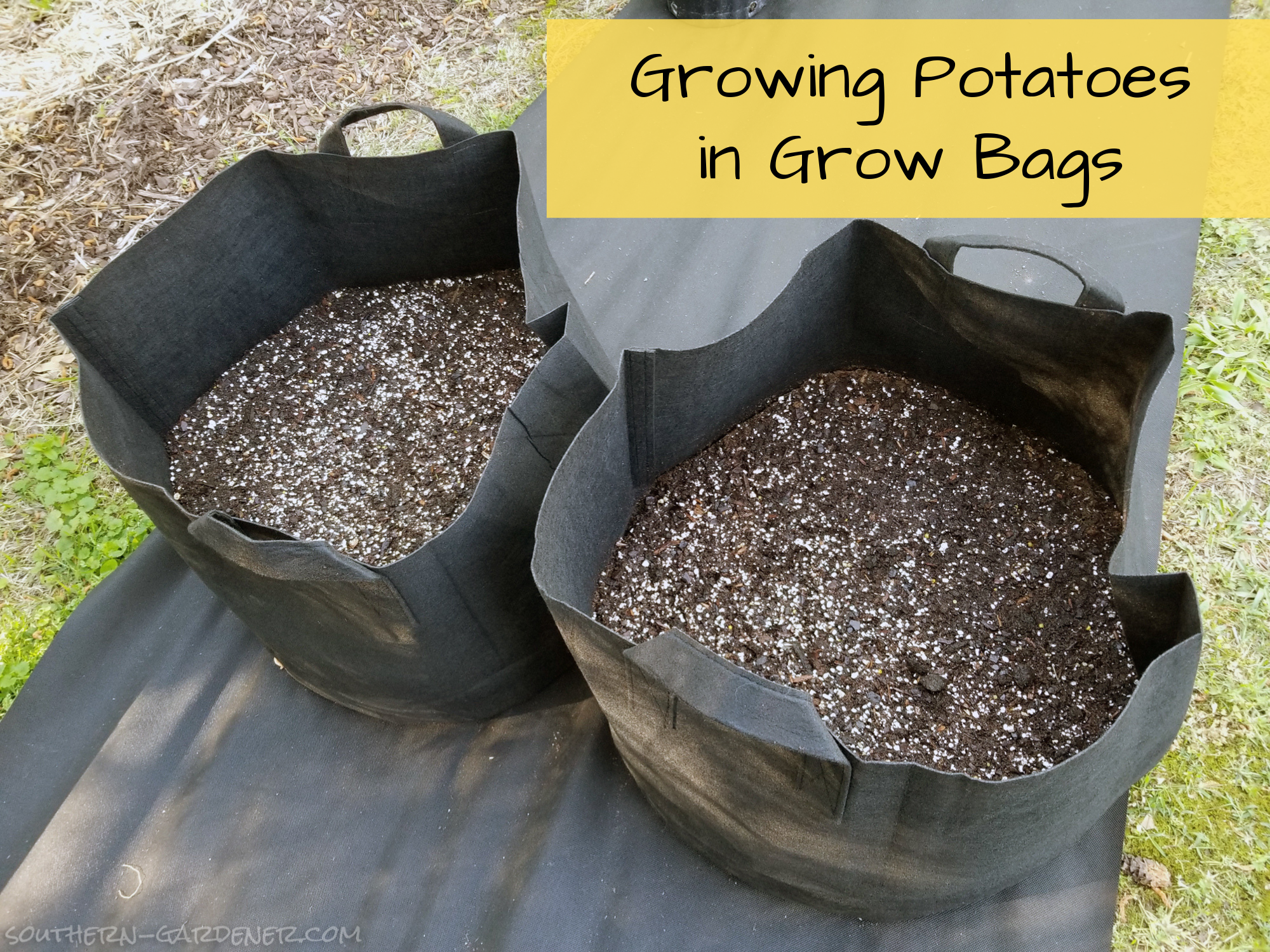 Growing Potatoes in Grow Bags