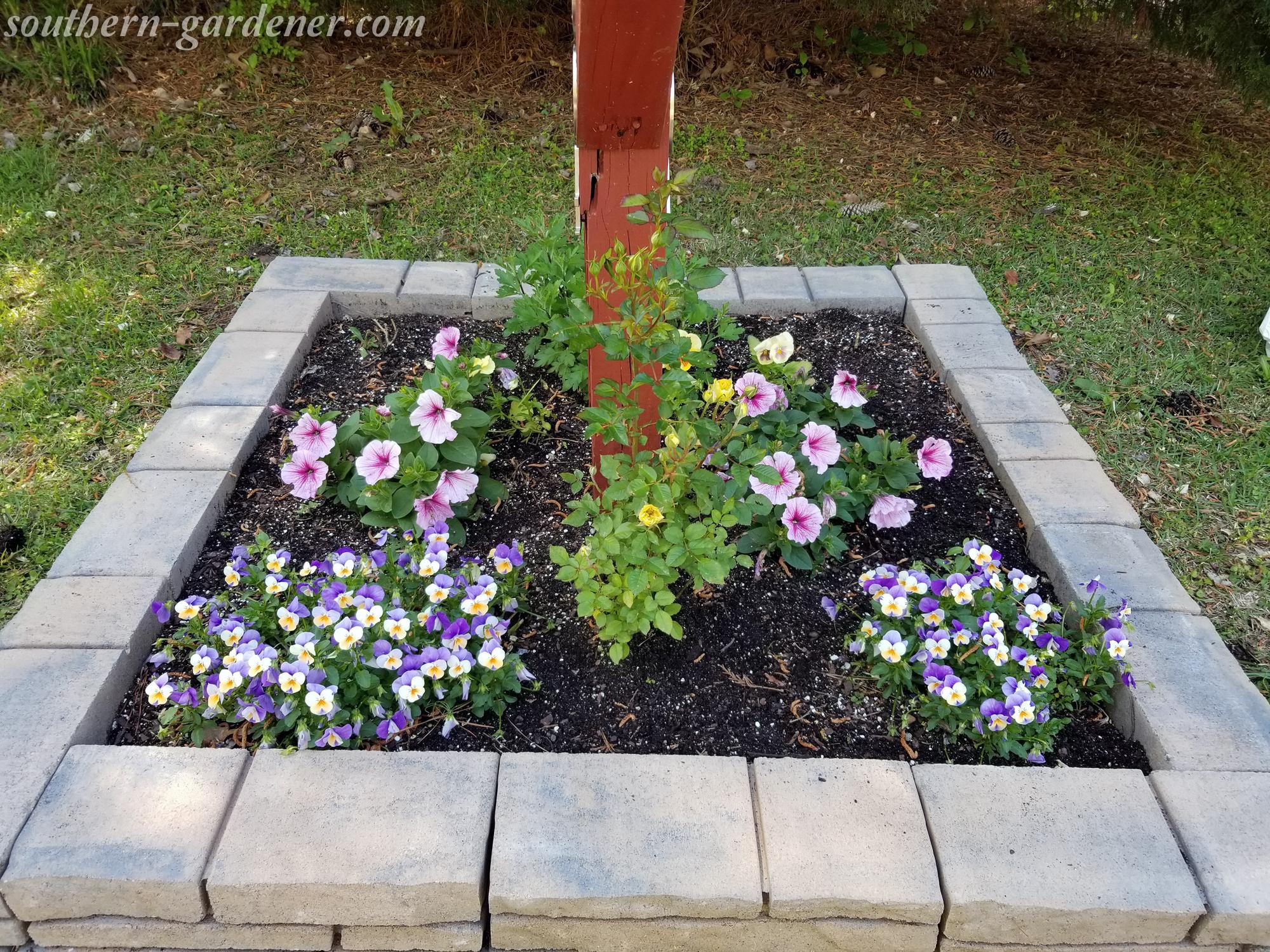 mailbox landscaping: violas, petunias, miniature rose bush