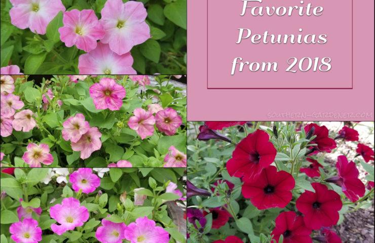 Favorite Petunias from 2018